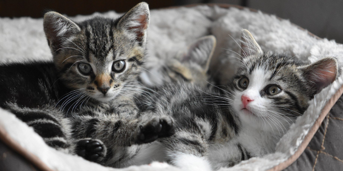 17 Things You Should Know Before Getting A Cat / Kitten
