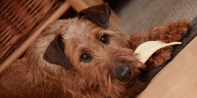 15 Ways You Are Hurting Your Dog Without Even Knowing It