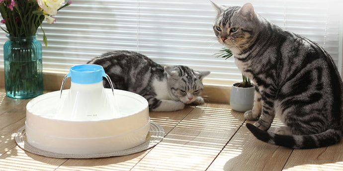 How to Encourage Your Cat to Drink More Water