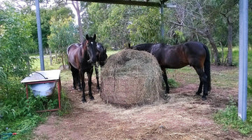 What happens to the excess netting as the horses eat the round bale down?