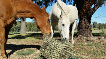 Slow Feeders for Horses: 10 Things to Remember When Using Hay Nets