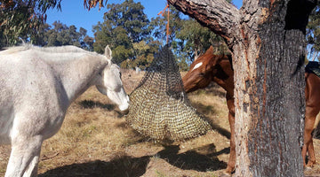 5 Rules in Feeding Horses: Using A Slow Feed Hay Net and More
