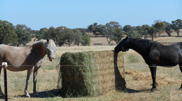 Hay Nets for Horses: How to Reduce Hay Wastage