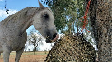 5 Ways to Prevent Laminitis in Horses this Spring
