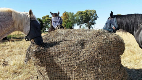 Horses eating from a 4cm GutzBusta Slow Feed Hay Net Round bale