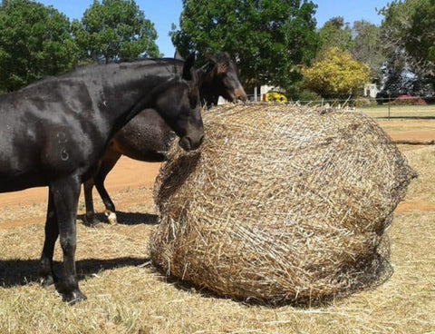 Two horses consuming GutzBusta® Round Bale Hay Net