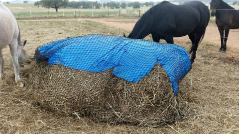 Horses eating GutzBusta® hay covered with blue tarp