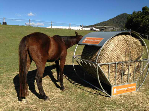Horse eating GutzBusta® Slow Feed Hay Net inside an advantage feeder
