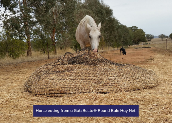 Horse eating from a GutzBusta® Round Bale Hay Net