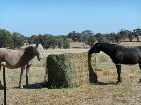 Horses eating from a GutzBusta Hay Net over a large export bale