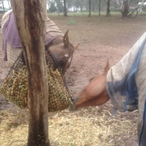 Horses eating from a hanging GutzBusta hay net