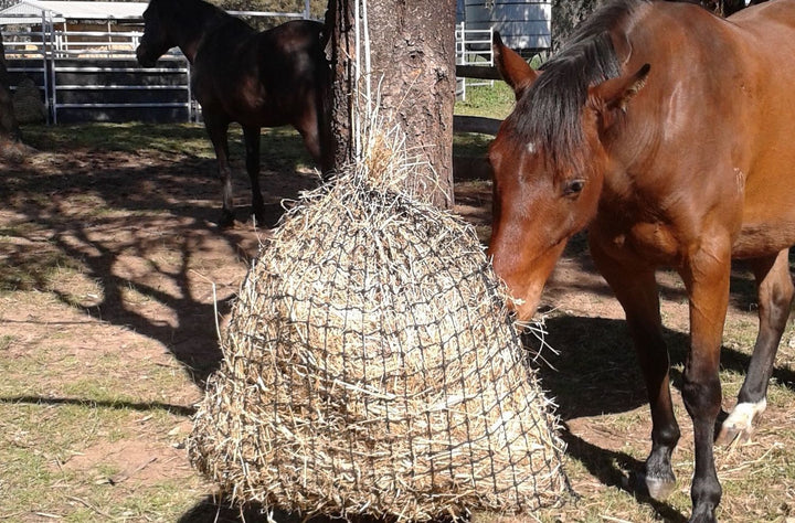 Welcome Gift: 4cm Medium GutzBusta® Hay Net + Lick Net with Salt