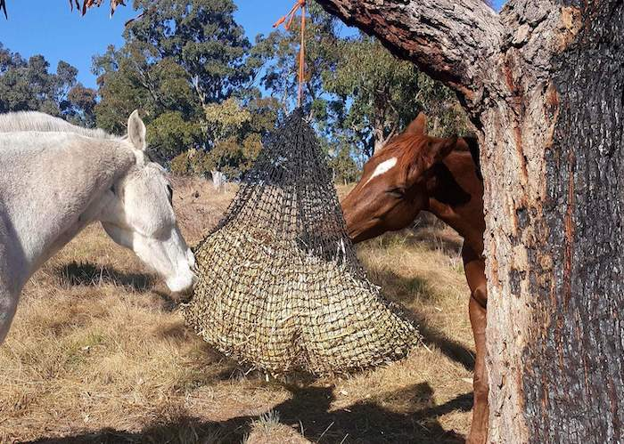 GutzBusta® Knotted Hay Nets - Large-02