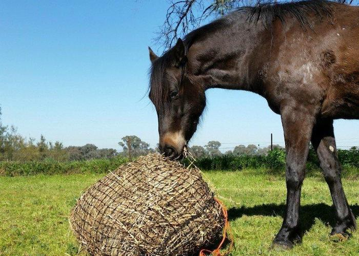 GutzBusta® Knotted Hay Nets - Medium