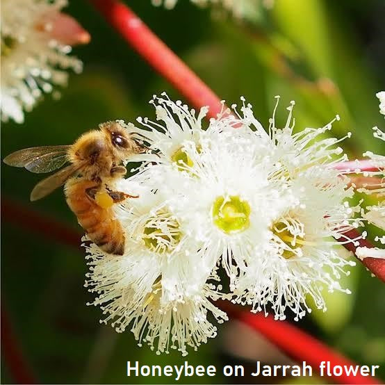ACTIVE JARRAH HONEY