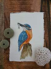 Laden Sie das Bild in den Galerie-Viewer, Maandvogel: ijsvogel a5