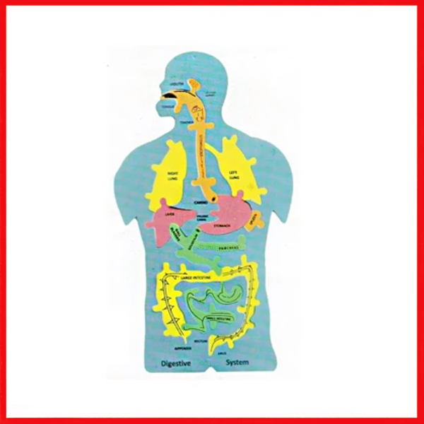 Digestive System Foaming Sheet