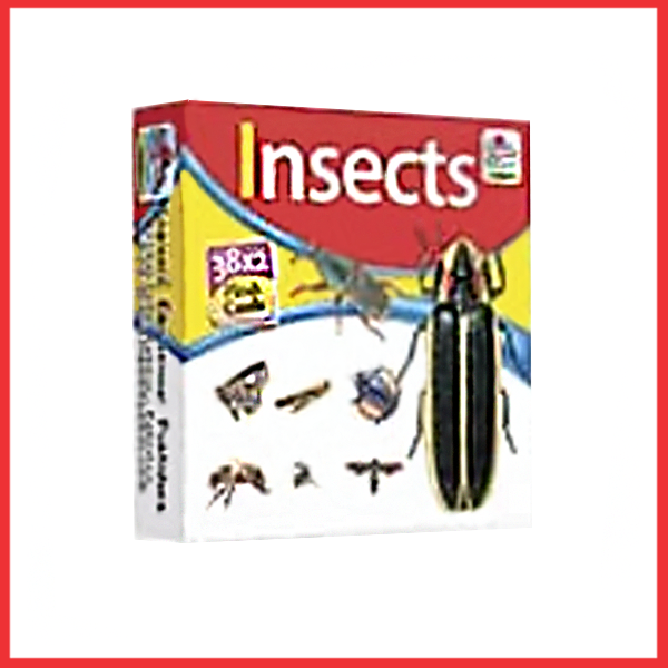 Insects Flashcards - Flashcards For Kids - Children's Flash Cards