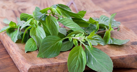 Chopped basil, perfect with pasta