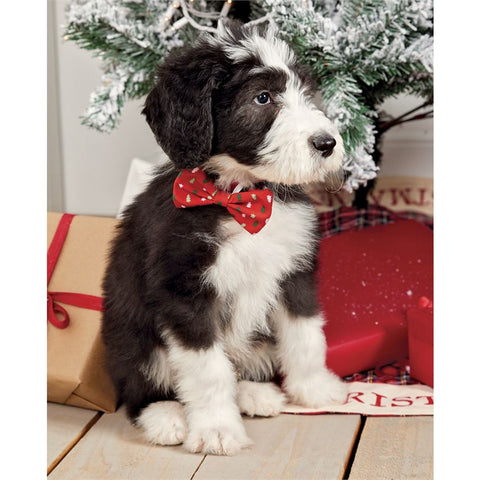 Holiday Dog Bows - Bella Bea Boutique