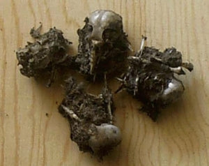 Bird Owl Pellets