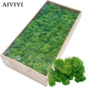 High quality DIY artificial green plant immortal fake flower Moss grass home living room decorative wall flower mini accessories