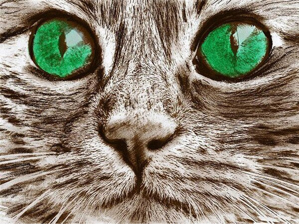 Green Eye Cat 5D Crystal Art Paintings Decorative DIY Home Decoration Select Round Square Inlay Diamonds Do It Yourself Project ADHD Therapy