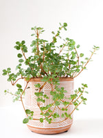 "3.5"" White Lines Terra Cotta Planter"