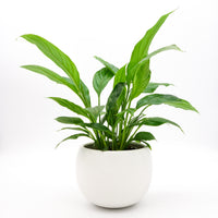 "Luna Pot 5.5"" - White"