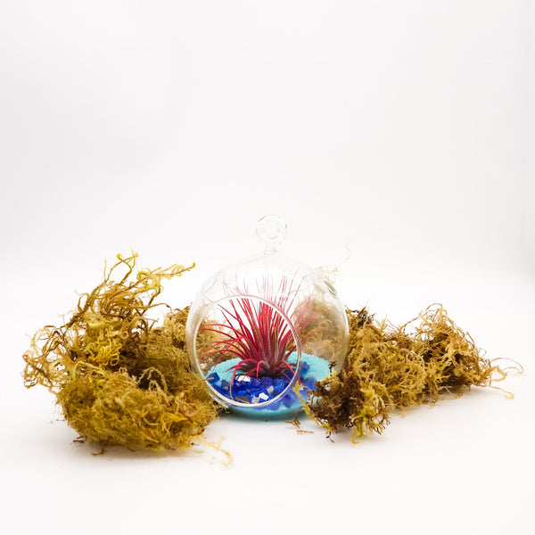 DIY Air Plant Terrarium Kit