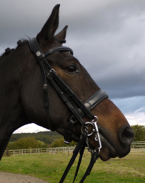 Silver Crown dressage double bridle