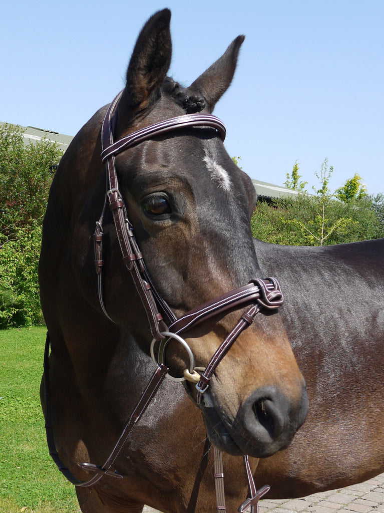 Silver Crown flash noseband