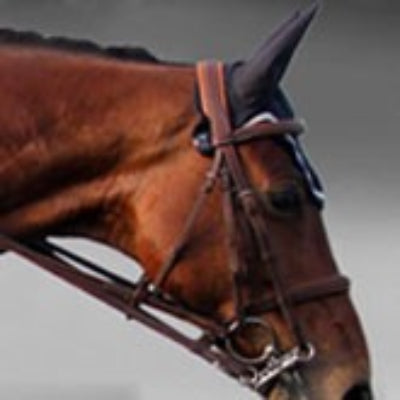 Silver Crown double bridle