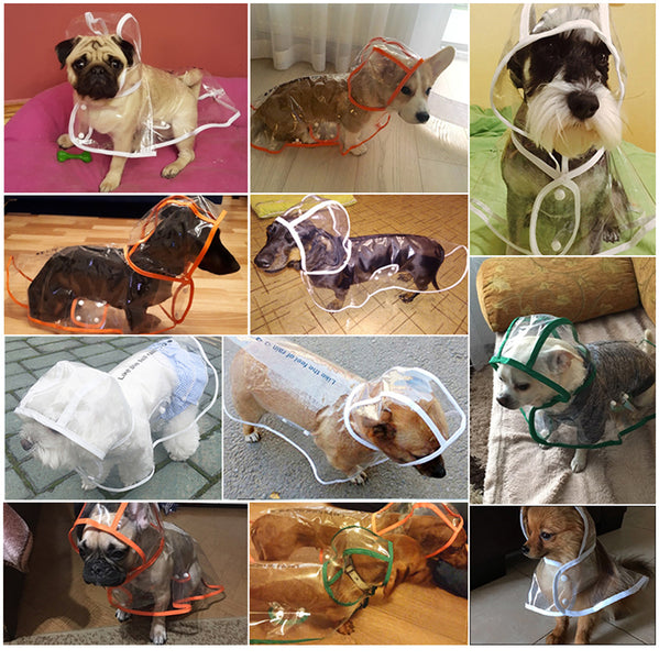 Transparent Raincoat for Dogs