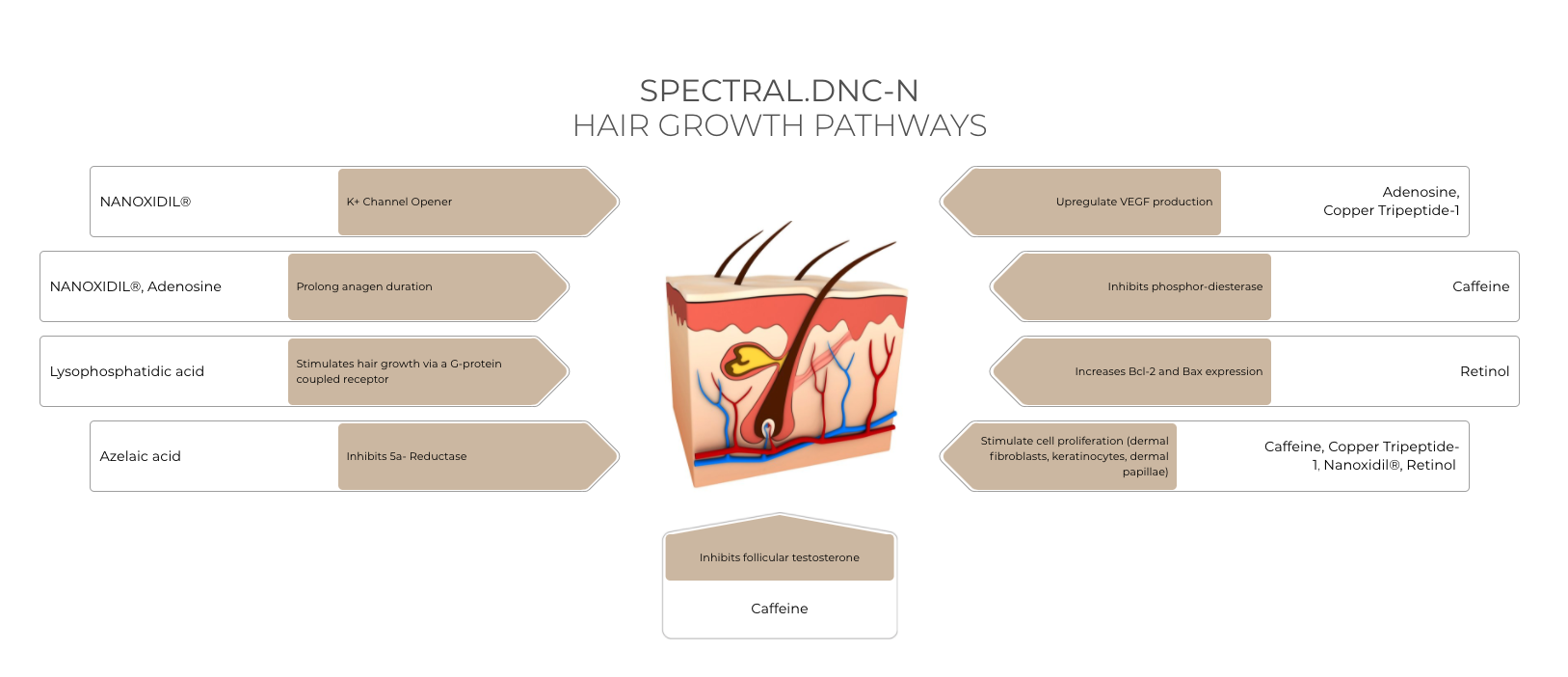Spectral.DNC-N Study - Males With Thinning Hair & Alopecia (Product Efficacy)