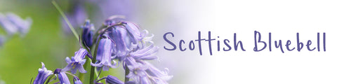 Scottish Bluebell Collection | Glenna Jewellery Scotland