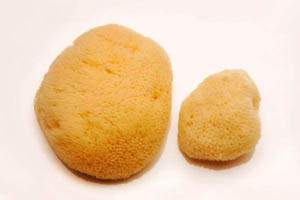 Pack of 2 Sea Sponges (1 large, 1 small)