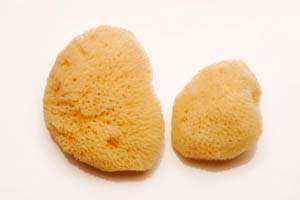 Pack of 2 Sea Sponges (1 medium, 1 small)
