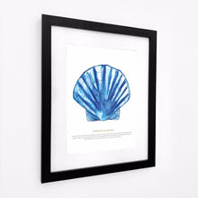 Load image into Gallery viewer, Scallop Watercolour Print