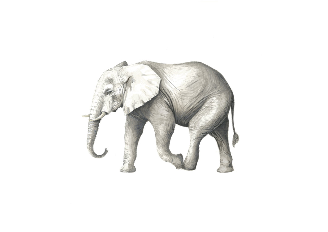 Elephant - (Limited Edition of 100) Killy & Co