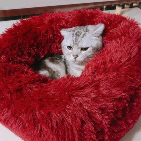 a cat lying on a red blanket