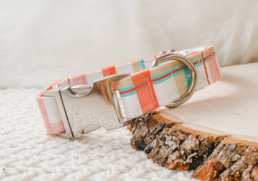 holiday dog collar in make it merry print