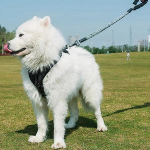 Dog Cat Harness Large Dog Leashes Pet Adjustable Vest Walking Lead Leash for Puppy Harness for Dogs-home-betahavit-M-120-150cm-betahavit