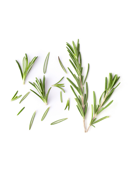 Rosemary Roll On Blend