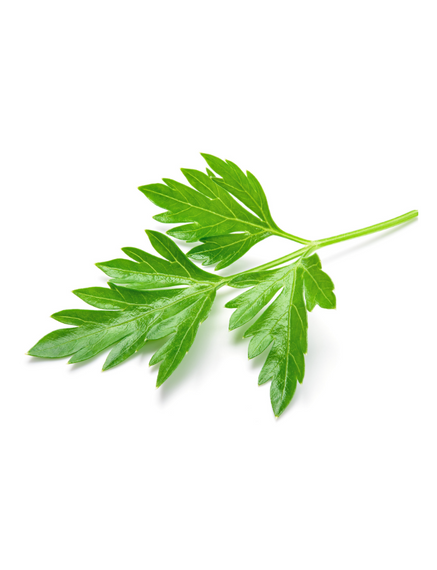 Parsley Extract Powder