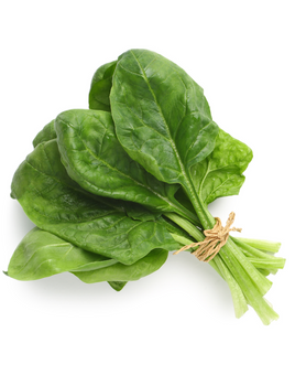 Spinach Extract Powder.