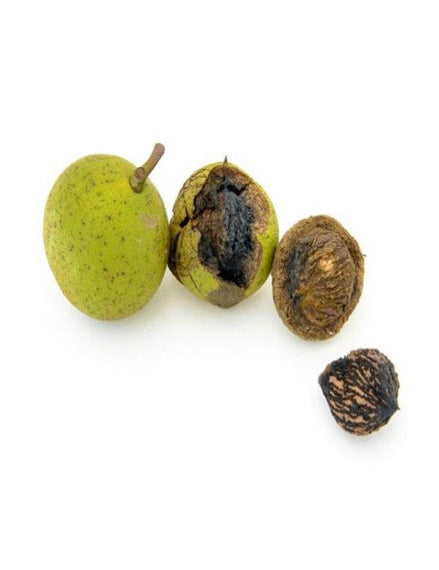 Black Walnut Hulls Powder (Bulk Bag)
