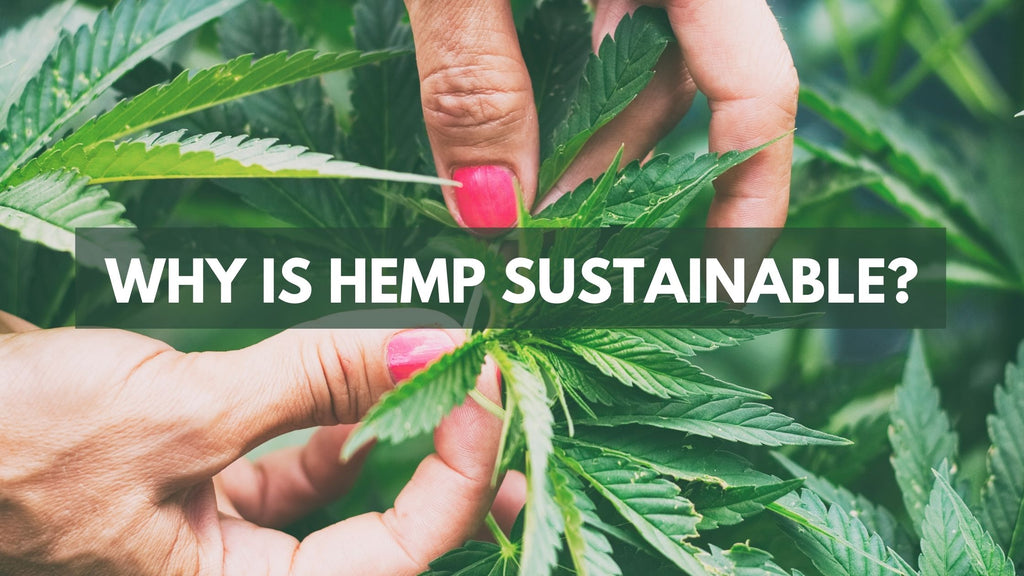 Why is Hemp Sustainable?