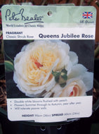 Rose - Shrub 'Queen's Jubilee Rose' 4L