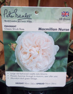 Rose - Shrub 'Macmillan Nurse' 4L